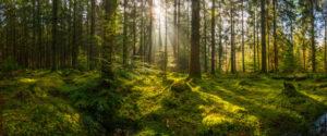 Investire nella riforestazione e nelle pmi SalvaDenaro